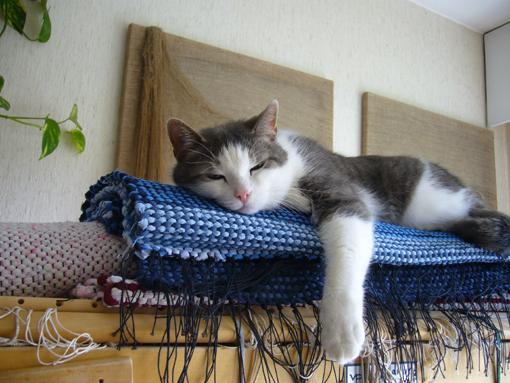 kuva Sisko Salo-Chydenius. Kissa.